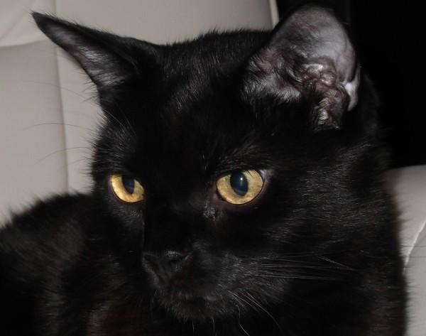 Baby - Diabetic cat off insulin