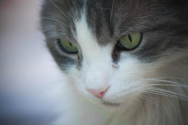 Help Diabetic Cat