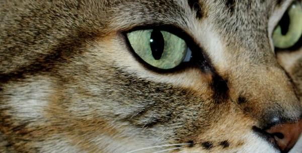 Insulin for a Diabetic Cat