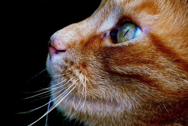 cat-321727