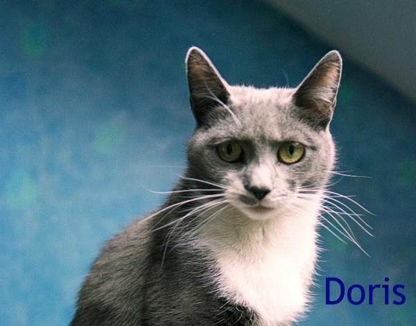 Doris Diabetic Cat-3
