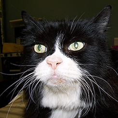 Cat before Acromegaly