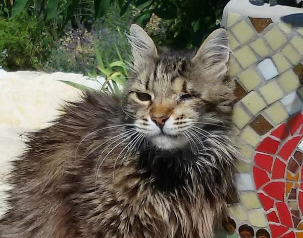 Eddy - diabetic cat off insulin