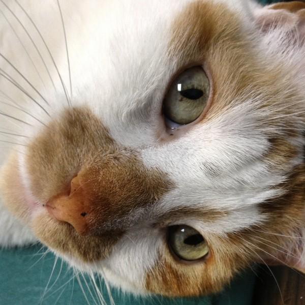 Treating Renal disease in cats