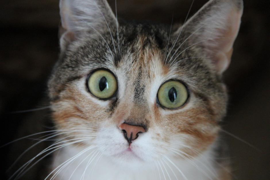 Cat hypo