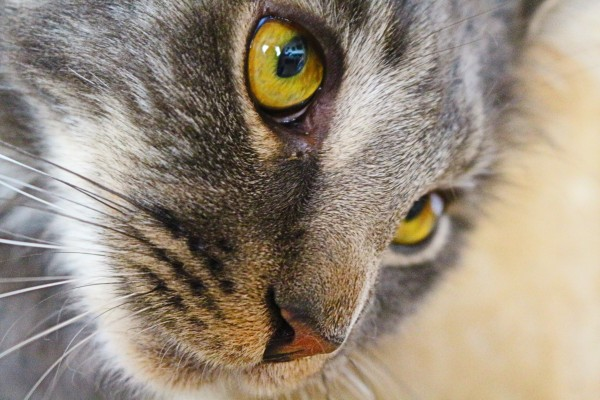 Subq fluids for cats