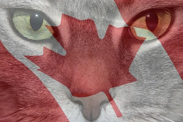 Feline Diabetes Canada