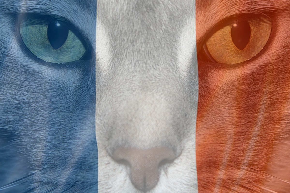 Diabetic Cat France 2
