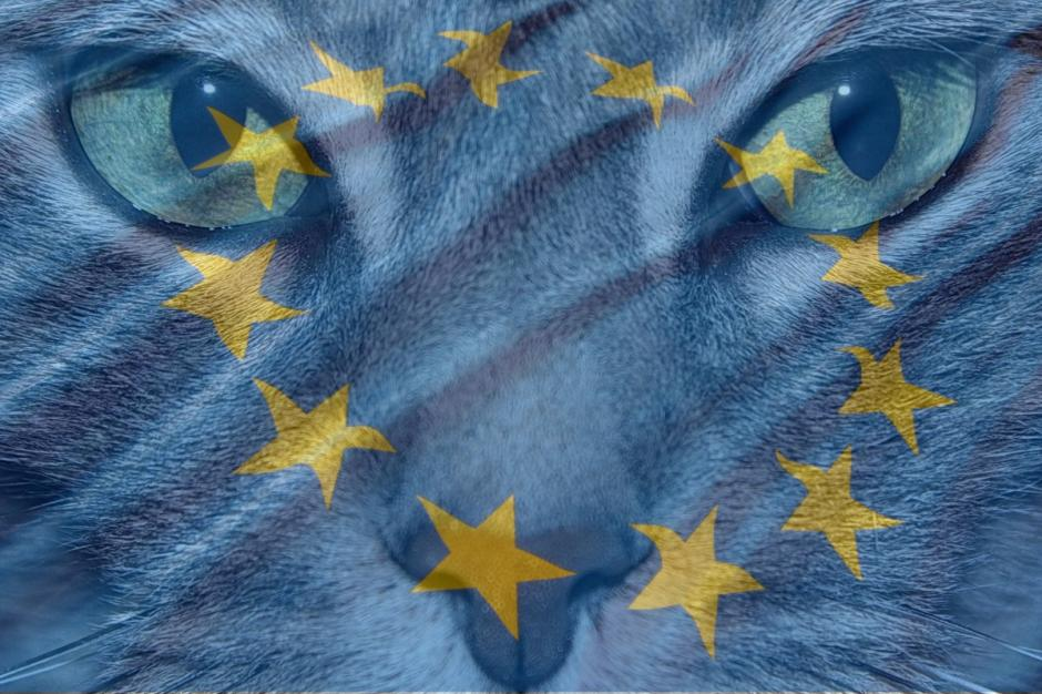 Diabetic cat europe