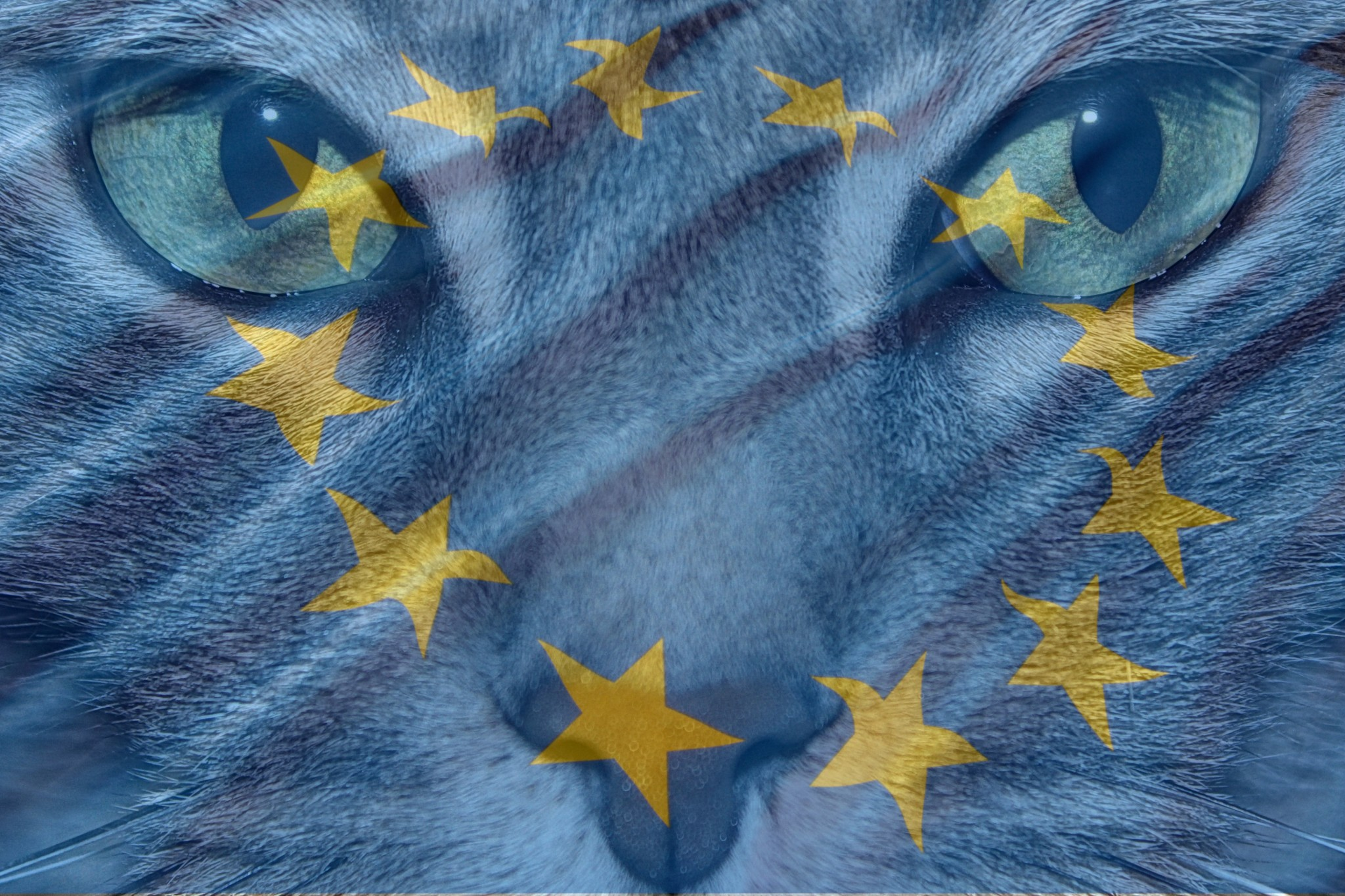 FD Cats - European Information