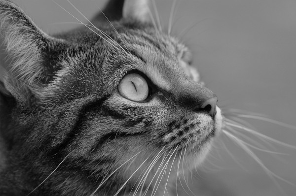 Articles on Feline Nutrion - right diet for a cat