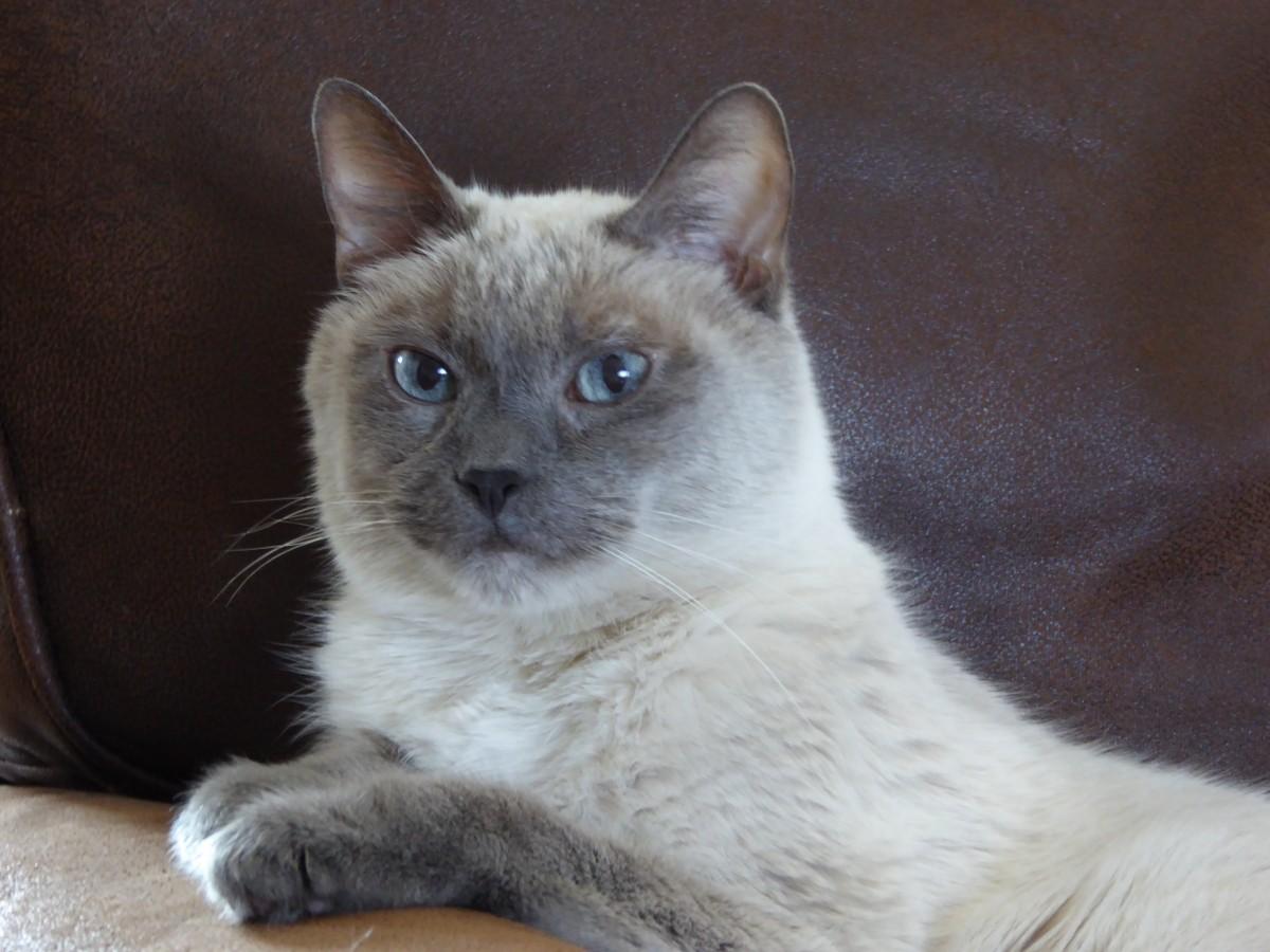 Cat no longer on insulin