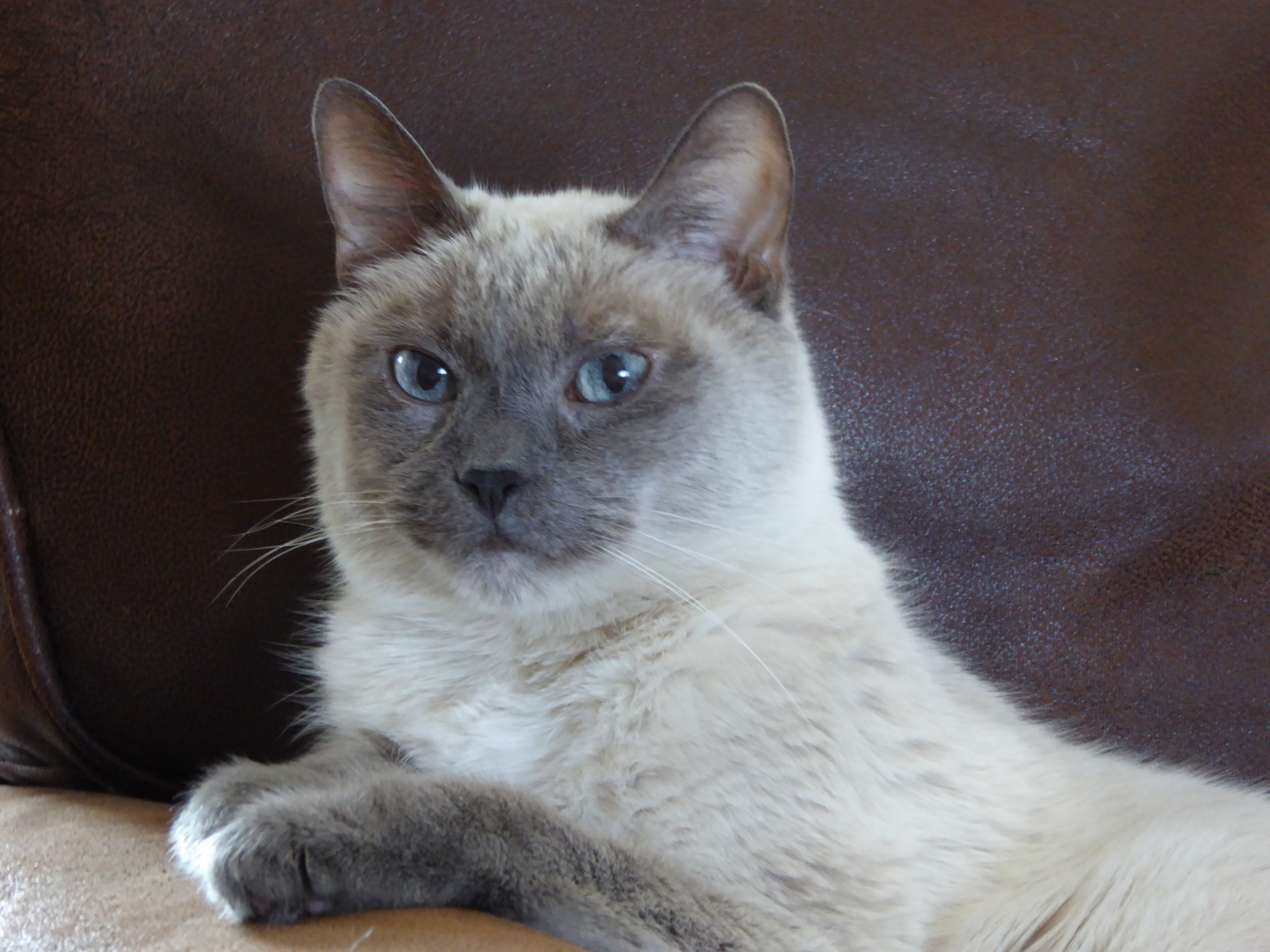 Fd cats no longer on insulin thanks dci forumfinder Gallery