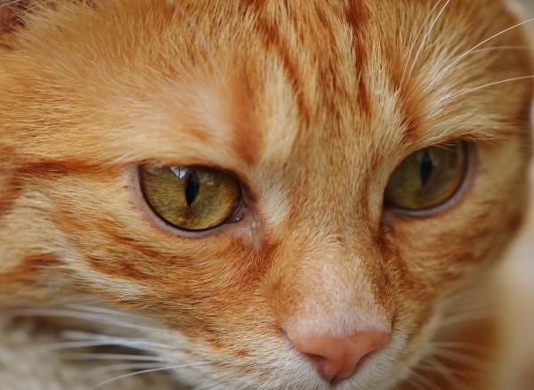 Acro cat treatment