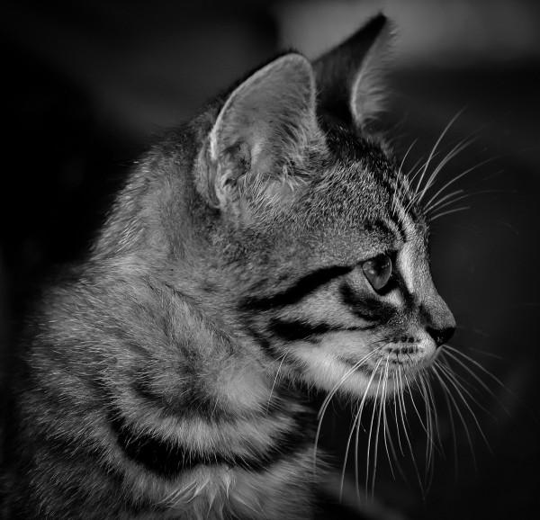 Diabetic Cat Tight Regulation